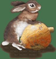 Kaz_Creations Animals Rabbit Hare