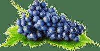 grapes blue raisin rouge