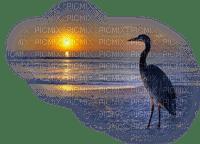 bird sunset oiseaux coucher de soleil