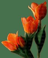 chantalmi  fleur tulipe orange