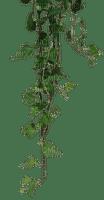 ivy  deco border lierre