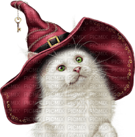 WITCH CAT halloween chat