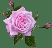 Trandafir 32