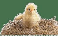 Poussin.Nid.Pâques.Chick.Nest.Easter.Victoriabea