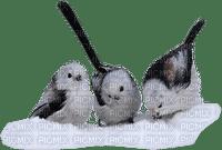 birds on snow