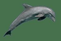 dauphin_dolphin_-Blue DREAM 70
