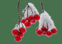 Winter branch_hiver branche