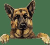 chien (
