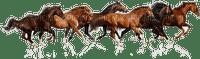 chantalmi  cheval