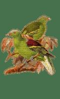 Vögel, Grün, Ast, Birds, green