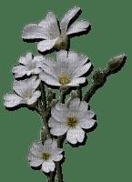 white flower-fleur blanche-fiore bianco-vit blomma-minou