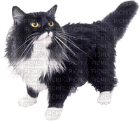 Chat.Cat.Gato.Victoriabea