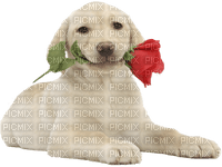 dog with flower bp