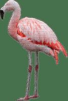 tube oiseau