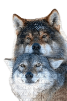 wolf wölfe winter hiver loup wolves loups  animal   tier  animals   tube