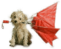 DOG.Chien.Rain.Perro.Umbrella.Parapluie.Victoriabea
