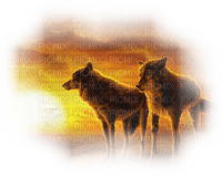 wolf sunset loup