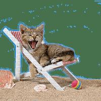 CAT ON BEACH CHAIR