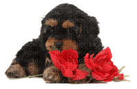 dog with flowers chien fleur
