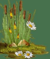 herbe, roseau, marais,deco,tube,fleur, Pelageya