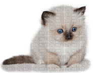 Kaz_Creations Cats Cat Kitten