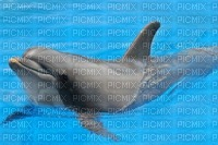 tres beau dauphin