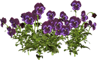 Frühling, Blumen