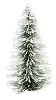 arbol  invierno  dubravka4