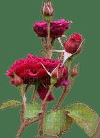 Red Roses.Fleurs.Flowers.garden.Victoriabea