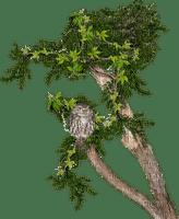 Arbre.Branch.Tree.Owl.branche.Victoriabea