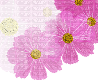 pink flowers Bb2