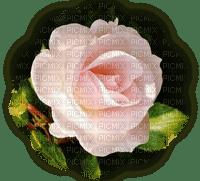 Trandafir 20