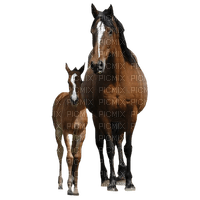 patymirabelle animaux cheval