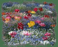 spring printemps summer ete field paysage landscape  tube deco  gras grass garden jardin  grass prairie Meadow wiese  lawn  flower fleur plant bushes blumen blossoms buissons
