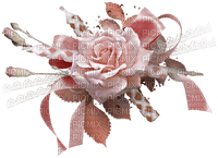 blomma-rose