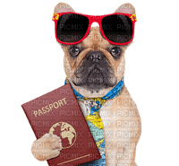 dog passport vacation chien  vacances passeport