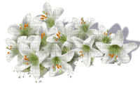 fleur-flower_fleurs-tube-lis-lily-decoration-white-blanc-image__Blue DREAM 70