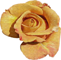 MINOU-YELLOW-ROSE-GUL-ROS