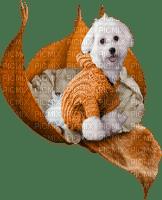 Chien.Dog.Perro.Victoriabea