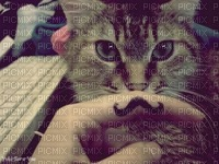 chat moustachu