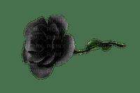 ruusu rose kukka fleur flower