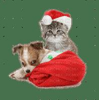 ♥ Santa Paws ♥