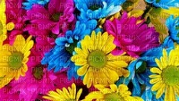 spring printemps frühling primavera весна wiosna  flower fleur blossom bloom blüte fleurs blumen  fond background