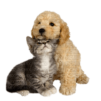 dog cat chat chien