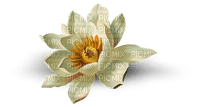 chantalmi fleur nénuphar