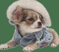 chien chapeau dog hat