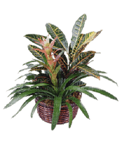 Plants.Pot.Deco.plante.Victoriabea