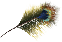 peacock feather feder deco tube  ressort bird oiseau