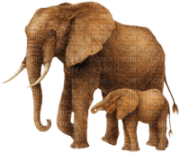 Kaz_Creations Animals Animal Elephants Elephant