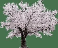 Sakura, printemps, cerise, bois,deko Adam64